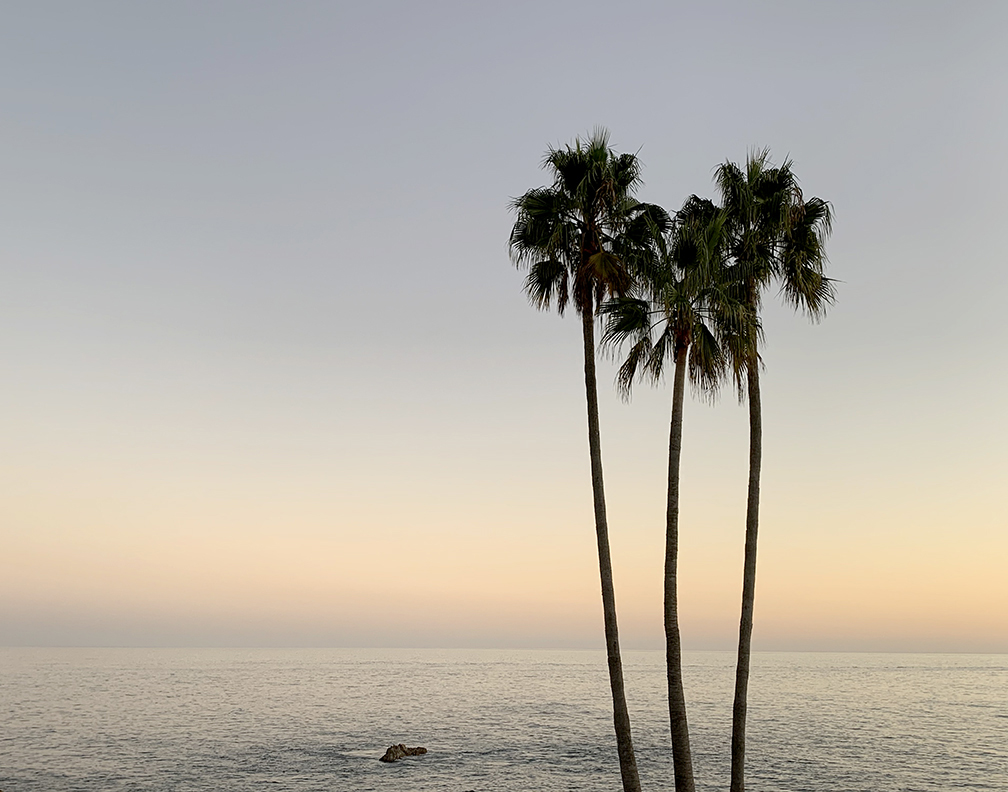 Color fine art photograph of palm trees in Laguna Beach California captured at sunset.